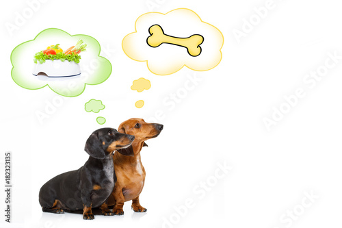 Staande foto Crazy dog healthy dogs with food bowl and owner