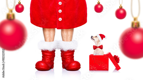 Staande foto Crazy dog christmas santa claus dog