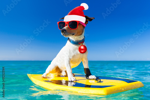 Staande foto Crazy dog surfer christmas santa claus dog