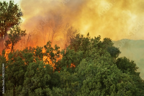 Burning Forest Wildfire