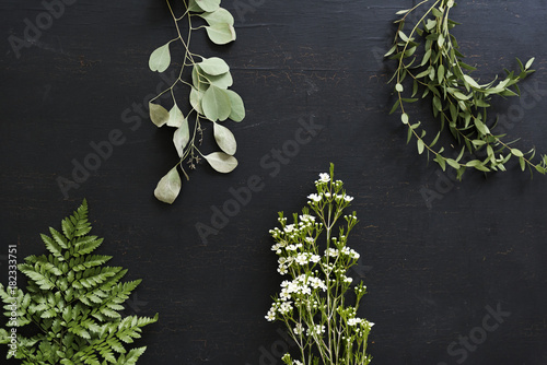 Wallpaper of plants leaves on black background