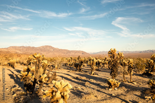 Tuinposter Blauw the joshua tree