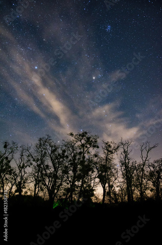 Constellation of Taurus rising above silhouettes of large old trees just after sunset with clouds enriching this picturesque scene