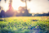 Inspirational nature closeup, blurred bokeh background and dandelion in soft sunlight with sun beams - 182377113