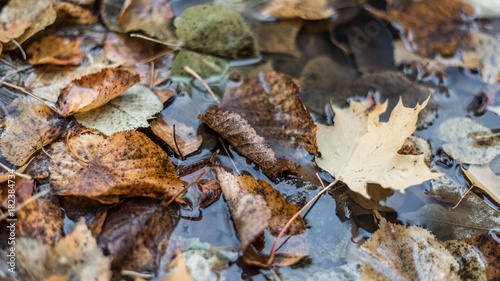 Foto op Canvas Gras Multicolored wet leaves after a rain. In the water in nature. In the puddle the foliage is wet. Beautiful background of leaves on the ground. Brown orange foliage.