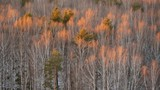 Autumn birch grove view from above - 182385927
