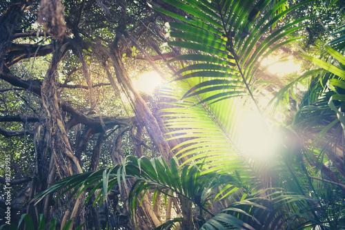 wewnątrz lasu deszczowego, sunburst przez palmy