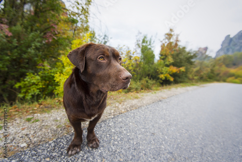 Brown dog in the road, lost and homeless dog