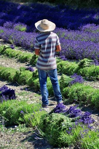 Keuken foto achterwand Lavendel Plein le dos