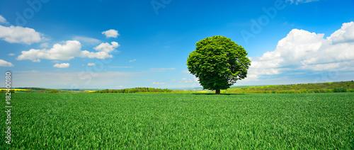 Einzelner Baum, grünes Feld, blauer Himmel, weiße Wolken, Landschaft mit Kastanie im Frühling - 182400180
