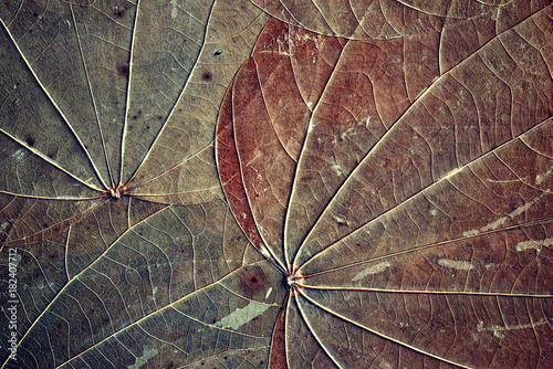 Old dried leaves with visible veins and specks, natural abstract background, color toned.