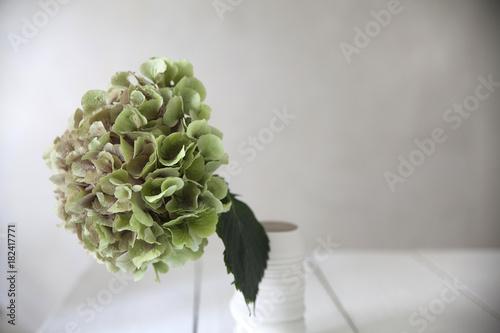 Fotobehang Hydrangea Big hortensia.