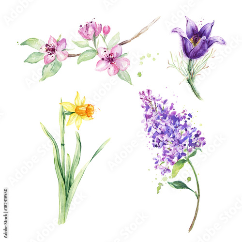 Spring floral set. Collection with spring flowers, drawing watercolor, anemone, narcissus, daffodil, lilac, sakura