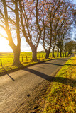 Beautiful rural road with trees and sunlight in Spring, Scotland - 182427103