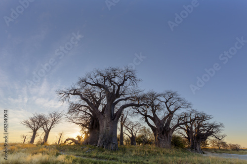 Papiers peints Baobab Sunrise at Baines Baobab trees
