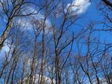 Autumn sky peeps through bare forest