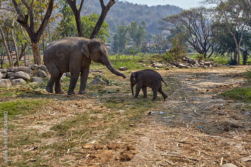 Elephant and her child