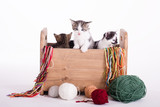 cute kittens in a wood box in a studio on white background - 182449338