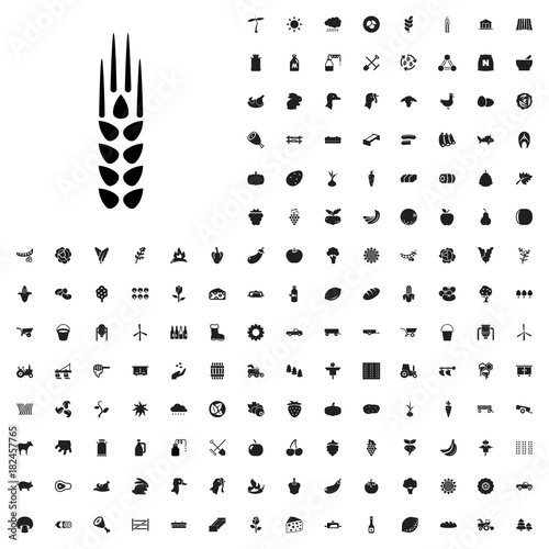 Fototapeta Wheat icon illustration . agriculture icons set for web and mobile.