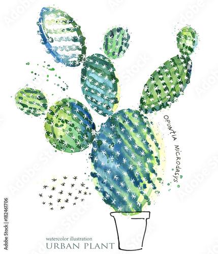 succulent plant. botanical watercolor illustration. - 182461706