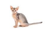 cat - 182470354