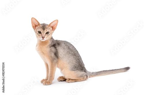 Fotobehang Kat cat