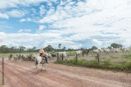 Fotobehang Natuur Cowboy herding cattle in farm