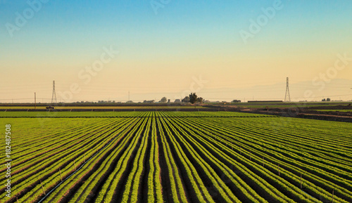 Green Rows of Agriculture fields in Calexico