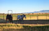 Horse farm in Rustic Texas - 182491995