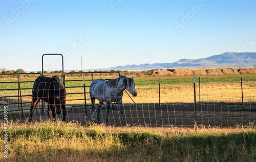 Plexiglas Paarden Horse farm in Rustic Texas