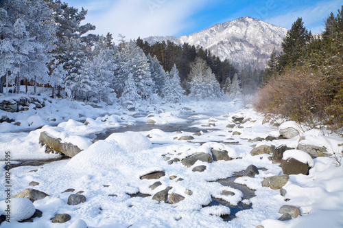 Fotobehang Bergrivier A beautiful winter landscape with a mountain river with snow-covered trees along the shore on a frosty January day
