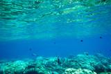 Underwater blue ocean background in sea - 182497368