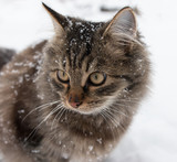 furry cat in the snow - 182509380
