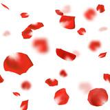 バラ 花びら 舞い散る 赤 - 182518155