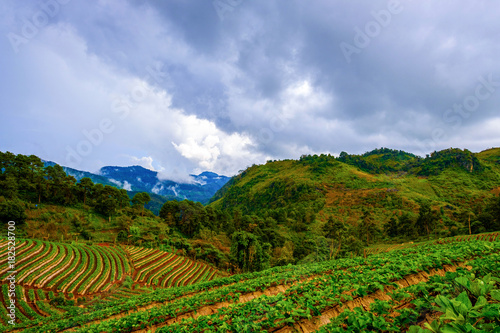 Tuinposter Blauwe hemel high mountains peaks range clouds in fog scenery landscape national park view outdoor at Doi Ang Khang, Chiang Mai Province, Thailand