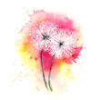 Valentine card -- air dandelions / Watercolor drawing, sketch, two flowers - 182529969