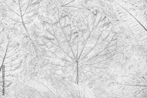 gray marks of leaf on gray concretefor background © prapann