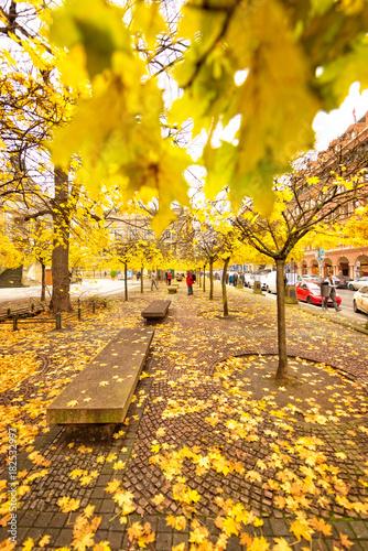 Foto op Canvas Herfst gendarmenmarkt berlin in autumn