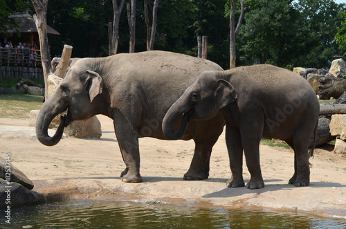 A family of elephants Poster
