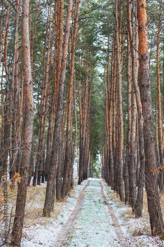 Fotobehang Winterlandschap Winter forest