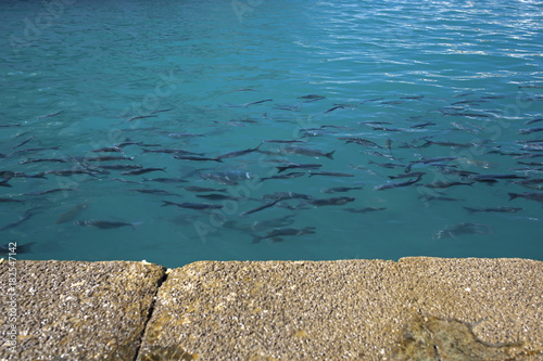 fish in turquoise water
