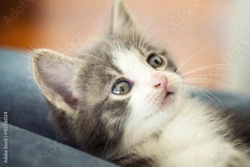 Fotobehang Kat Kitten looking at is owner