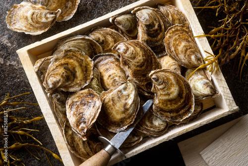 Fototapeta Fresh Oysters