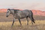 Wild Horse at Sunset in the Desert - 182606790