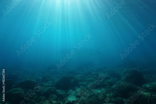 Natural sunbeams underwater with rocks on the seabed and a shoal of small fish, Mediterranean sea, Cote d'Azur, France