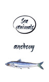 Fresh anchovy, marine atlantic ocean anchovy or sea anchovy fish species. Watercolor hand drawn illustration - 182670558