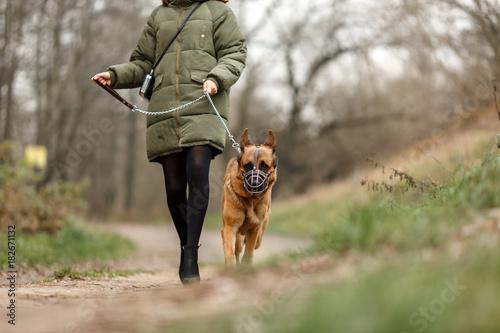 Немецкая овчарка на тренировке