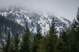 Fir trees in the foreground with cold, snow covered mountains in the background - 182685137