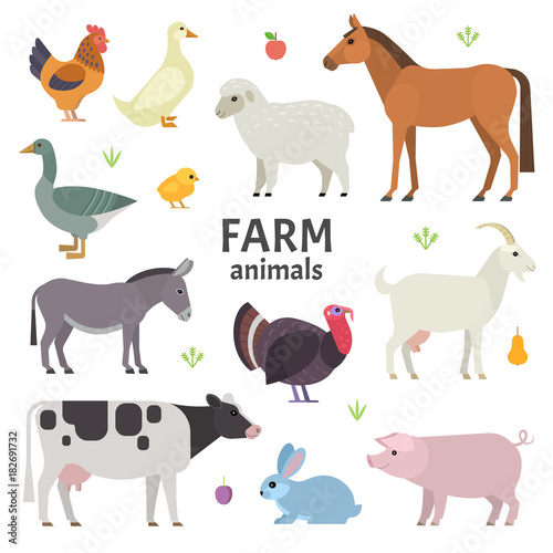 Naklejka Vector collection of farm animals and birds in trendy flat style, including horse, cow, donkey, sheep, goat, pig, rabbit, duck, goose, turkey and chicken, isolated on white.