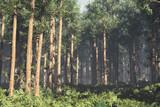 Wonderful Deep Forest